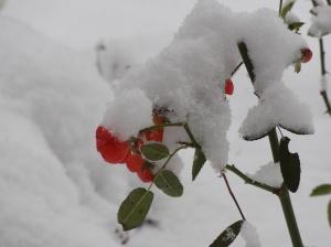 Ungewohnter Wintereinbruch
