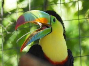 Rainbow, der Tucan, vom Hostal Chambres de Ville