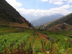 Blumenfelder säumen den Weg
