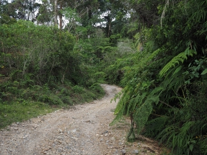 Dschungel mitten in den Bergen