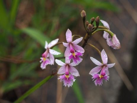 Orchideen in allen Farben