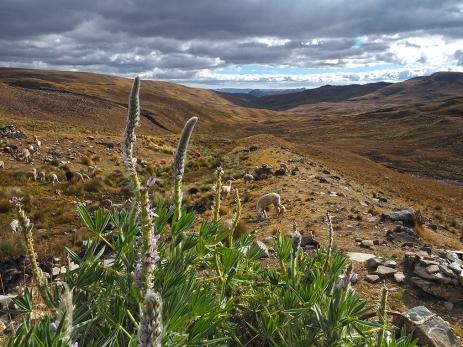 Die peruanische Sierra, schön ist es hier