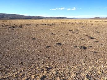 Es folgt die Wüste