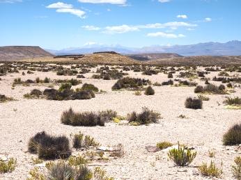 Das heutige Tagesbild, Wüste in allen Farben und Formen