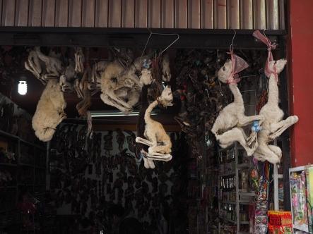 Lama Embryos auf dem Hexenmarkt, die werden immer noch in jedes Baufundament gelegt. Soll Glück bringen. Man sagt, manchmal werde so auch Leichen entsorgt...