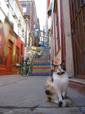 Eine hypnotisierte Katze