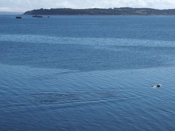 Delfin in Sicht. Oder Toninas, wie sie hier heissen.