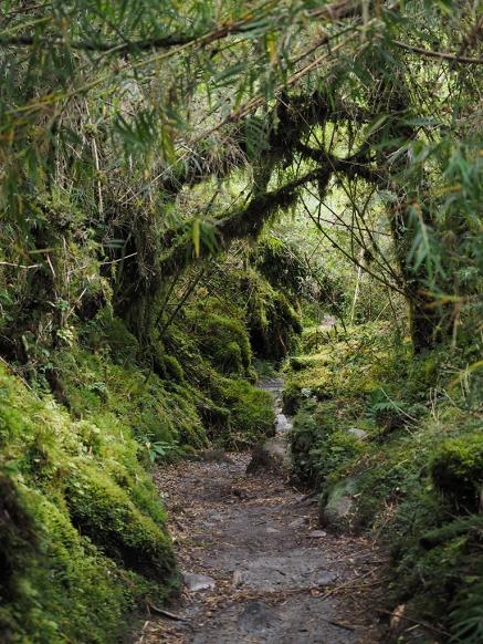 Durch den Regenwald wandern