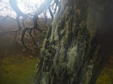 Bartbäume