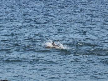 In der Bahia Inutil gibt's Delfine zu sehen