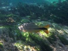 Erste Fische tauchen auf