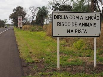 Wie soll man mit 100 km/h für eine Tier bremsen?