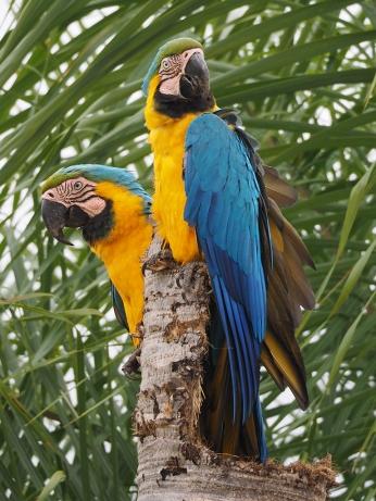 Was für schöne Vögel. Mit so viel Respekt!