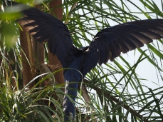 Flieg Vogel, flieg!