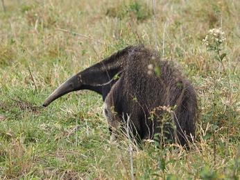 Was für ein seltsames Tier...