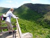 Blick auf den dichten Cerrado