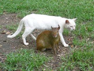 Tierische Nachbarn im Parque Campo de Santana