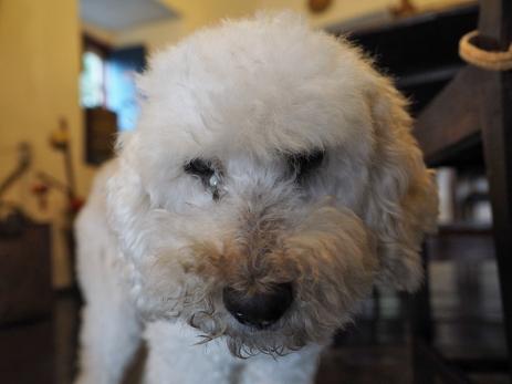 Flor, auch schon 15 Jahre alt... und sie mag Streicheleinheiten