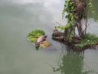 Am Ufer und im Wasser