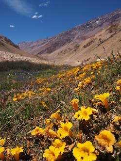 Noch mehr Farbe in der wunderschönen Landschaft
