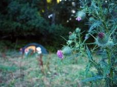 Campen auf der Kuhweide